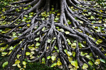 """TED Talks by Stefano Mancuso: """"The intelligence of plants"""""""