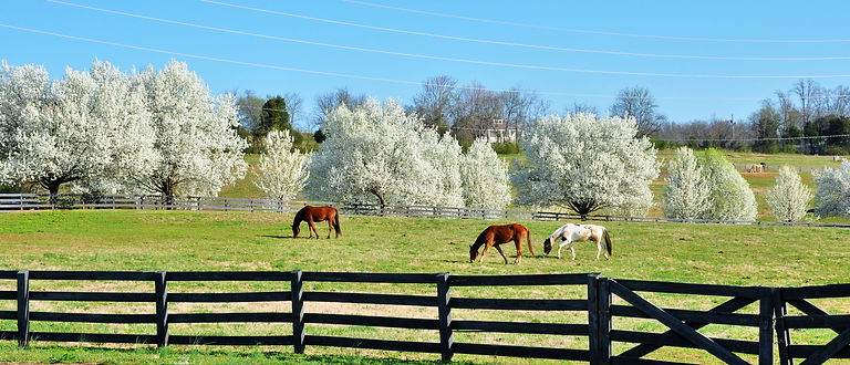 pastures, trail riding, Monroe County, TN horses