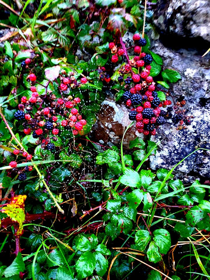 Webs and berries grow on the stone bridge over the Aille River