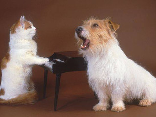Recital: Songs About Our Pets