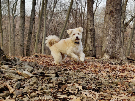 Why I want to tell people about my rescue dog, Benny