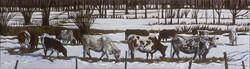 Circle of Cows