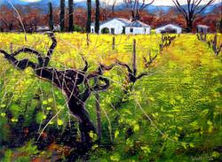 Calistoga Vineyard with Mustard