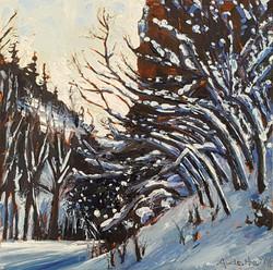 Scrub Oak Winter - 1