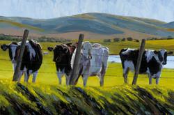 Four Curious Cows