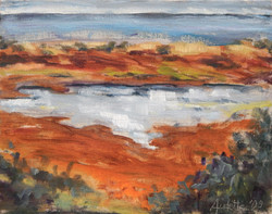 Bodega Marsh
