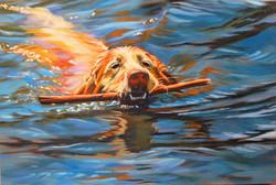 Kelsa Fetching the Stick