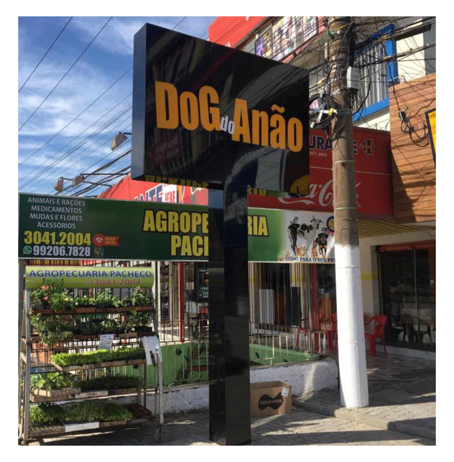 Dog do Anao