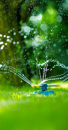 Water Requirements for Turf Master Sod