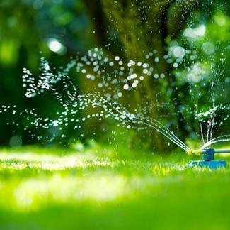 Summer Watering Advice