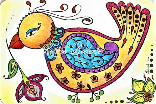 """Pasley bird"" illustration"