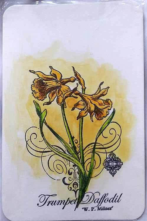 """""""Trumpet Daffodil"""" postcard"""