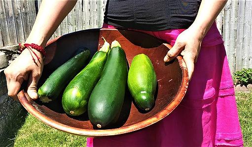Zucchinis 1.jpg