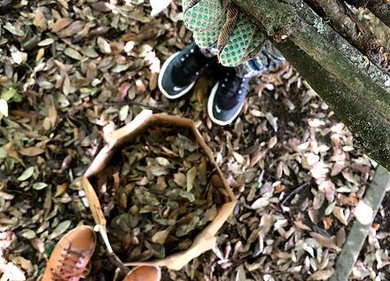 paillage feuilles mortes potager.jpg