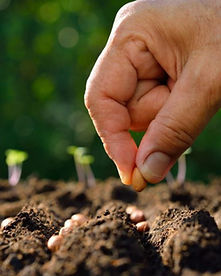 Seed-planting-party-820x548.jpg