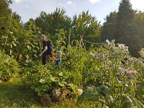Jardin Raymond VI_4.jpg