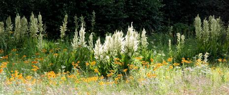 Field of Flowers.jpg