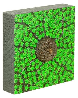 Acorn in the Moss