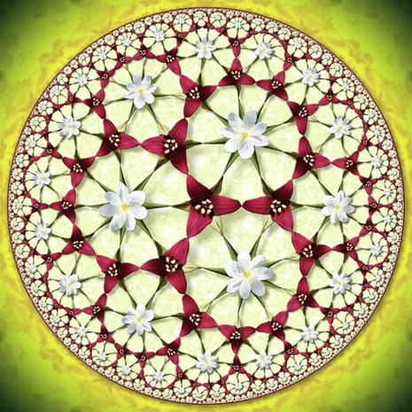 Hyperbolic Trillium