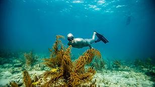 PADI Master Freediver.jpg