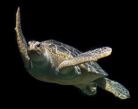 PADI Rescue Diver - Scuba Courses Testimonial