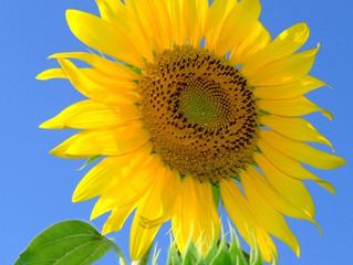 今日の花言葉 ●令和3年 8月5日 木曜日●