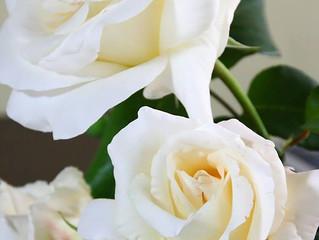 今日の花ことば