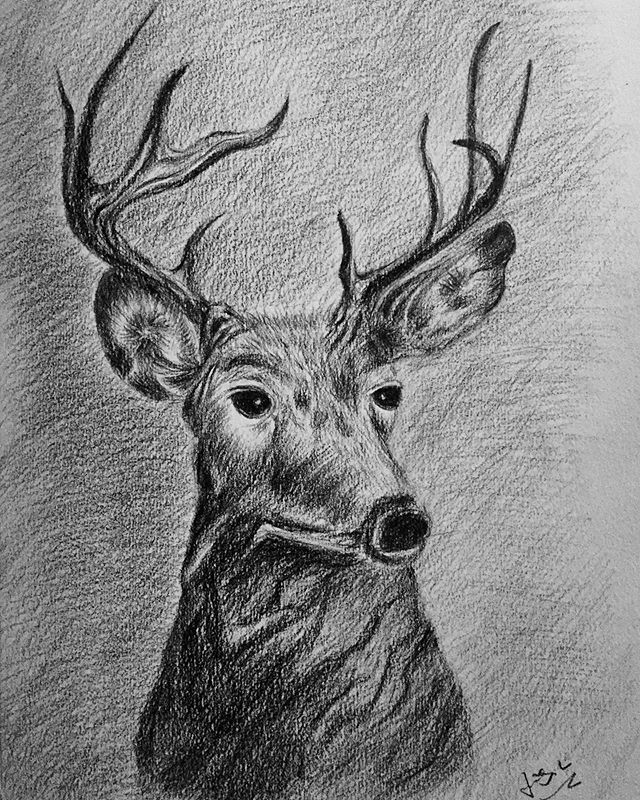 pencil drawing of a deer head
