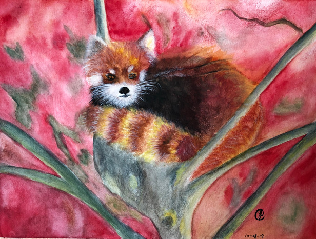 A red panda in a tree