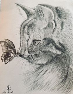 A butterfly on cat nose