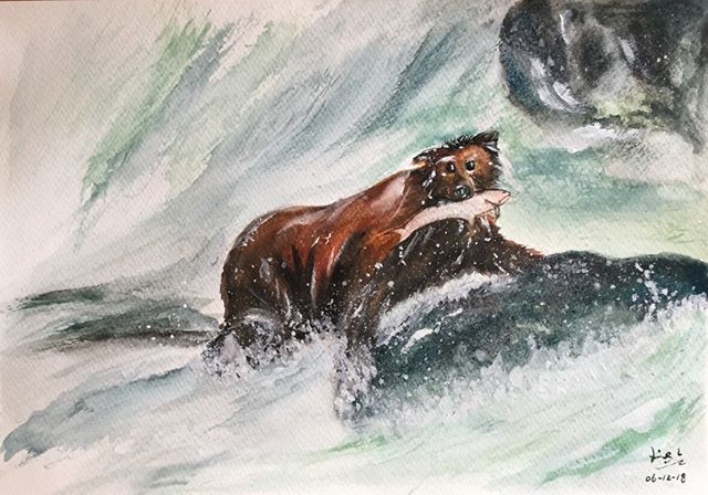 water-colour painting of a bear catching salmon
