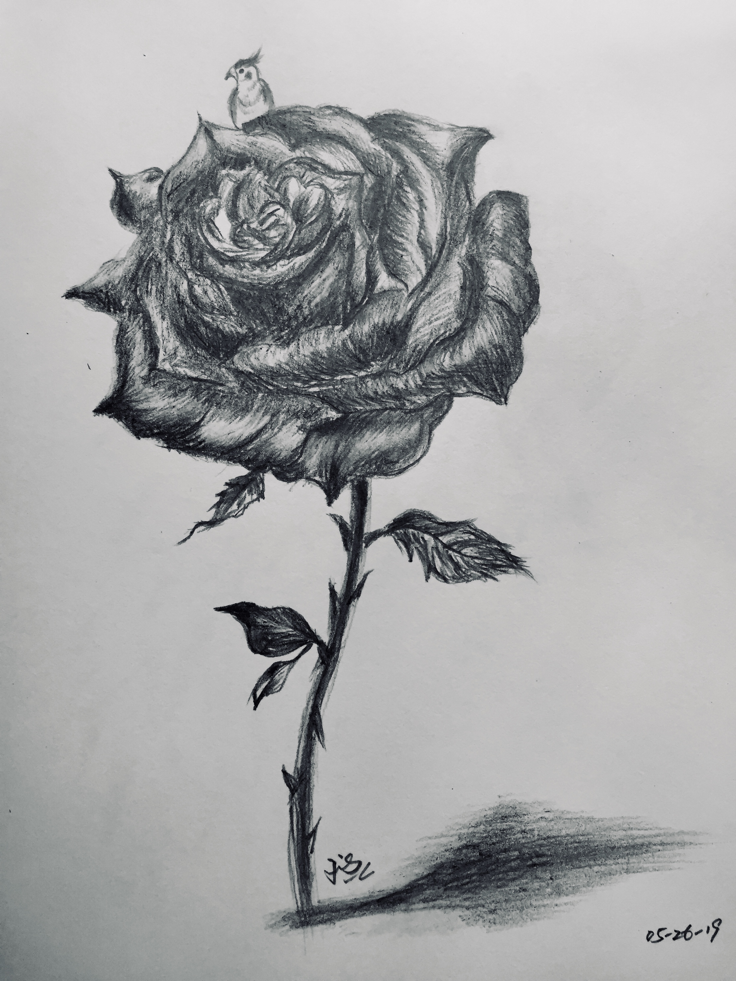 pencil drawing of a little bird on rose