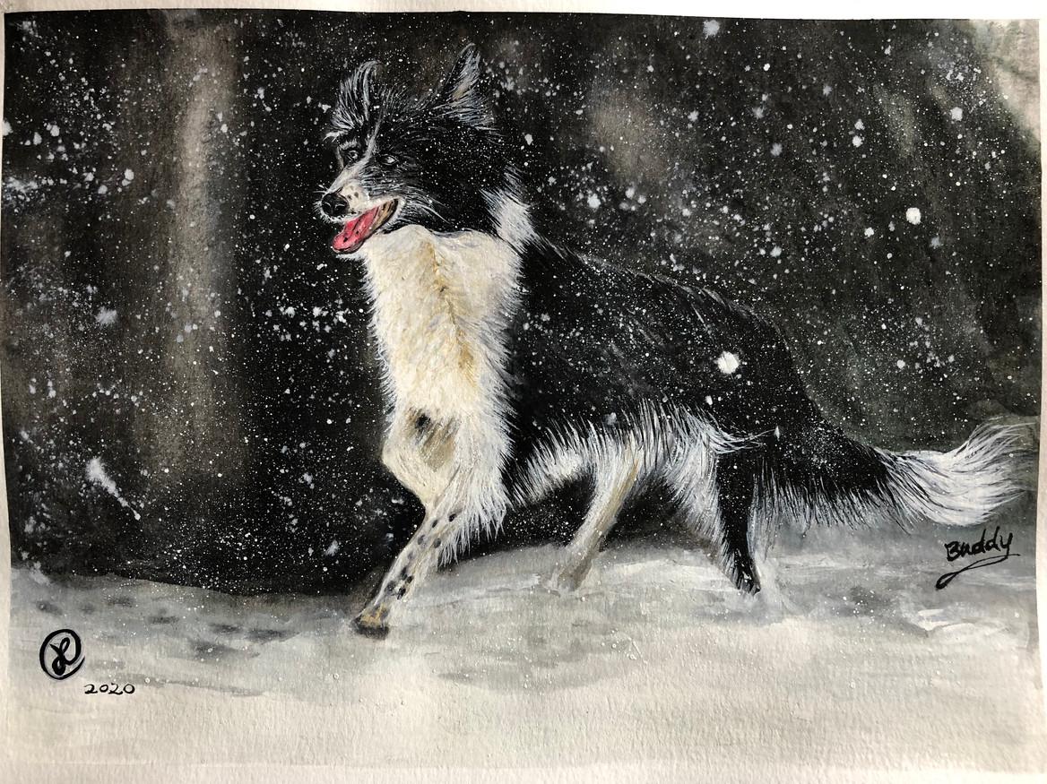 """Buddy"" running in snow"