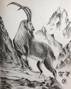 A alpine Ibex