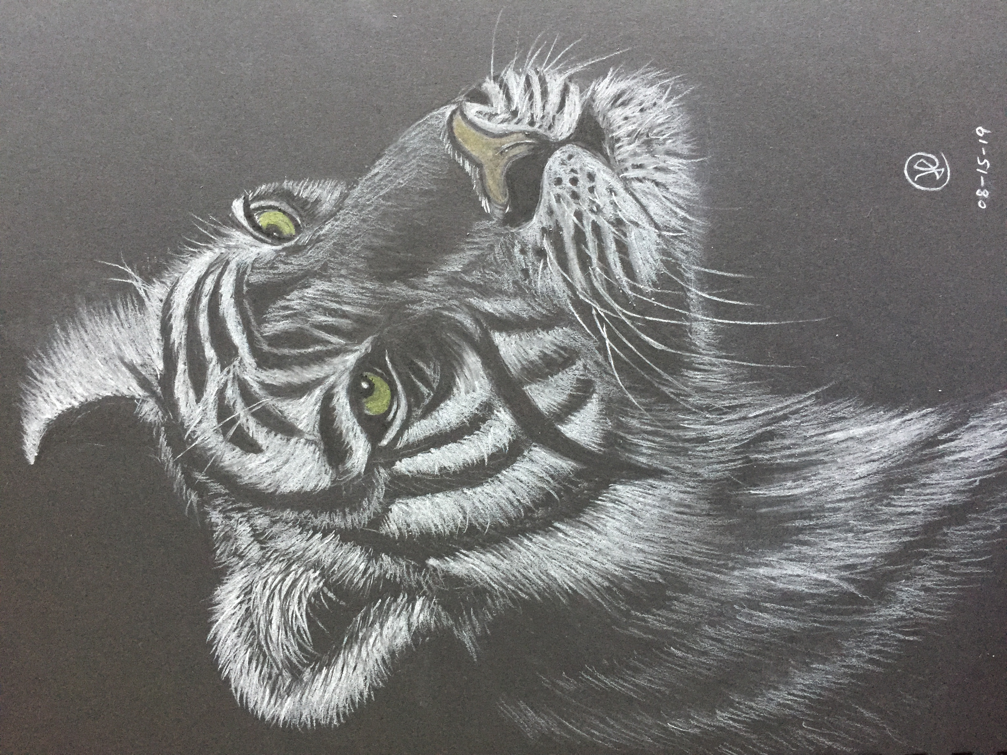 charcoal drawing of a tiger