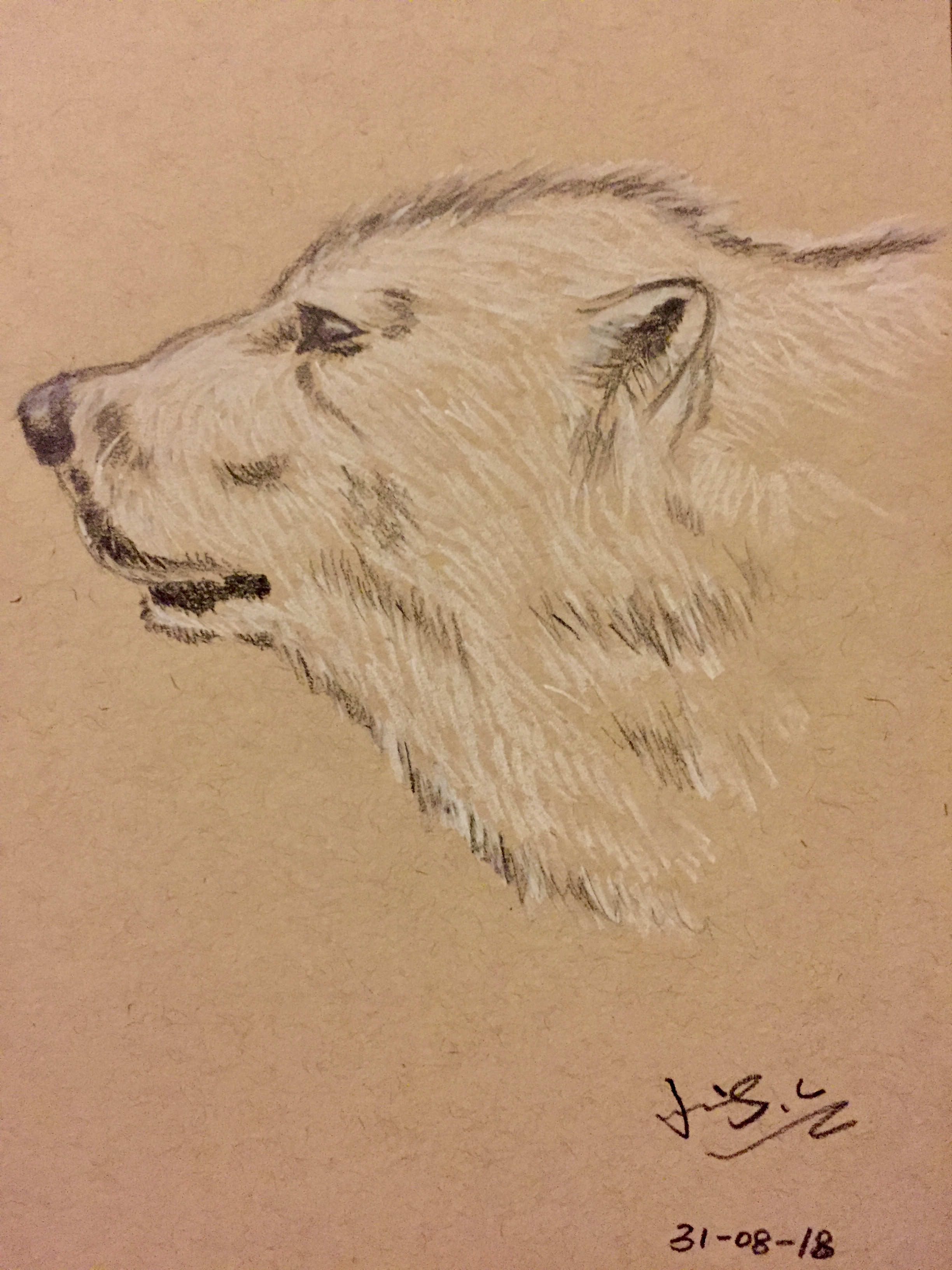 charcoal drawing of a polar bear head