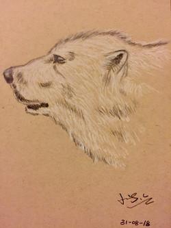 charcoal drawing of a polar bear head