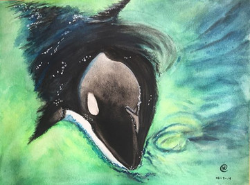 water-colour painting of a baby whale emerge from water