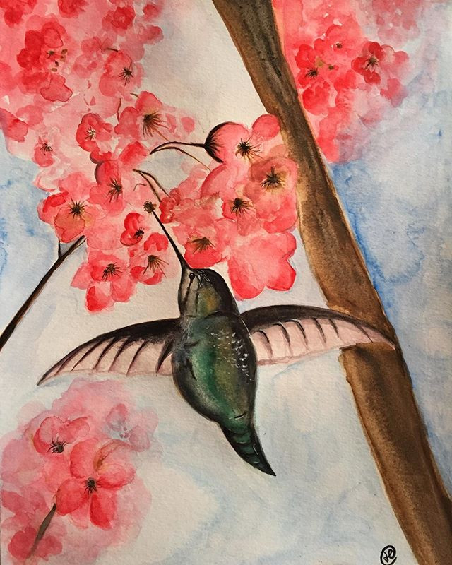 water-colour painting of a humming bird in cherry blossom tree