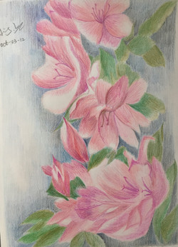 colour pencil drawing of flowers