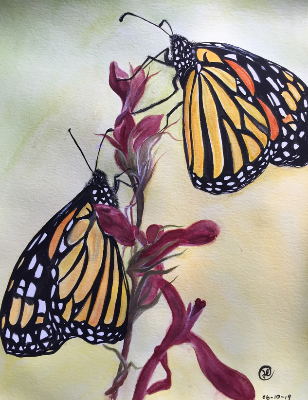 water-colour painting of butterflies