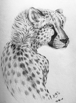 pencil drawing of a leopard