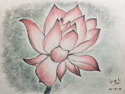 charcoal & colour pencil of a water lily