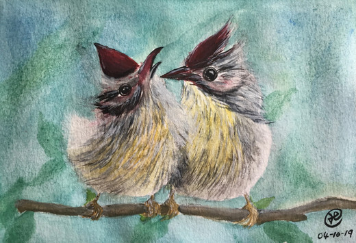 water-colour painting of baby birds in spring