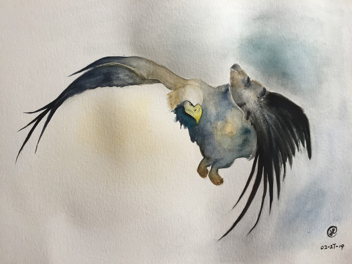 water-colour painting of an eagle