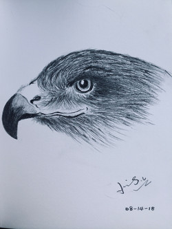 pencil drawing of an eagle head