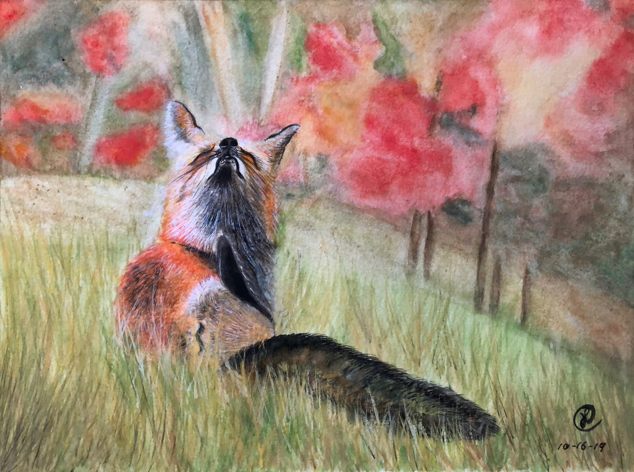 A fox in the fall field