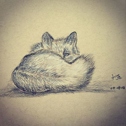 Charcoal drawing of an arctic fox 1