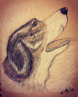 Charcoal drawing of a dog 1