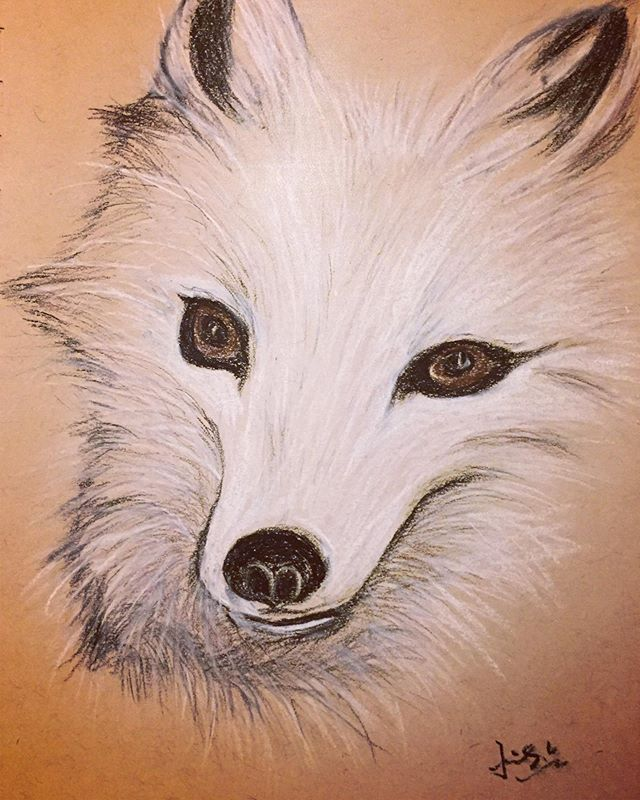 Charcoal drawing of an arctic fox II
